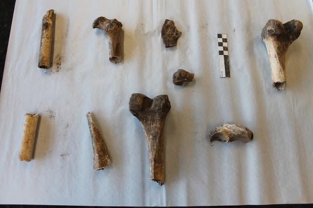 Parte-do-material-arqueológico-sob-guarda-do-IFSC-Foto-MAGe-IFSC